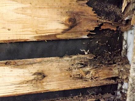 木部躯体が腐食した様子の画像